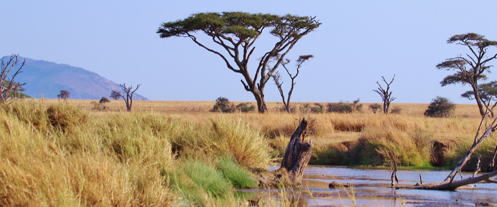 Quiz Tanzanie