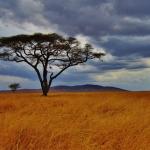 Quiz Tanzanie thumbnail