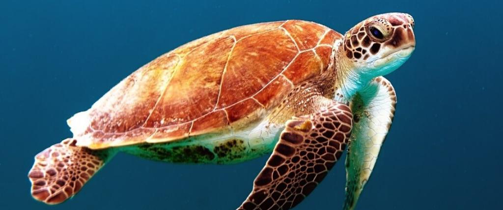 Quiz animaux marins