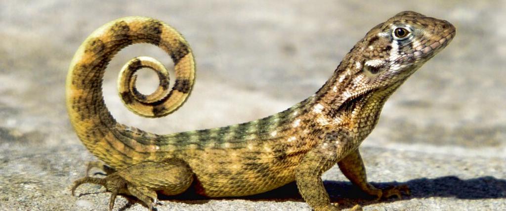 Quiz reptile